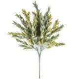 ruscus bush